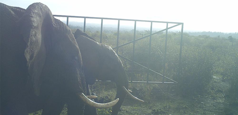 Elephants Kenya case study banner 870x420px