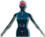 hormonen in een vrouw