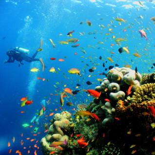 Picture of Sipadan colourful corals
