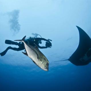 Manta Ray and Diver, Socorro Island