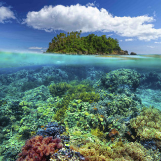 Reef coral, Philippines