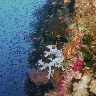 Coral Wall, Fiji