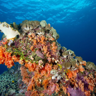 Hard and Soft Coral with Sponges