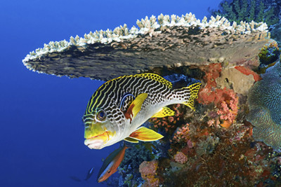 A fish off the coast of Komodo