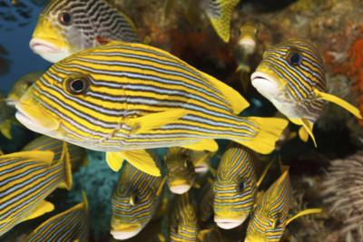 Colourful fish in Raja Ampat