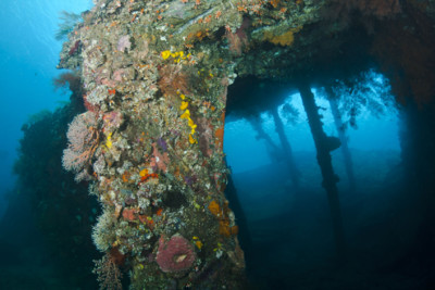 The Liberty Wreck, Asia