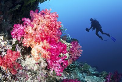 Soft coral diving Fiji