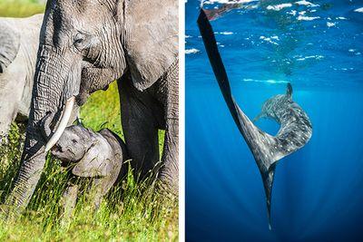 Safari and Scuba Diving in Tanzania