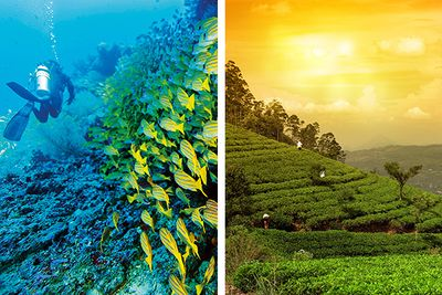 Culture holiday in Sri Lanka and scuba diving in the Maldives