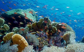 Picture of Marine life Moyo Iisland