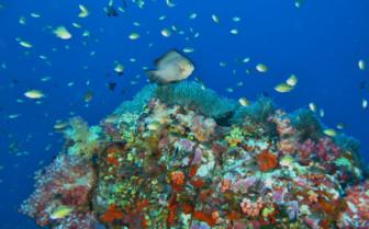 Picture of Anitas reef Similan Islands