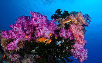 Picture of colourful coral Moalboal