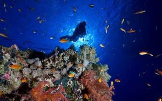 Picture of corals around Barren Island