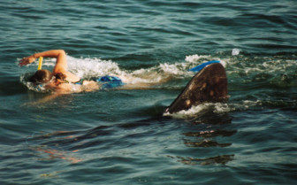 Picture of snorkelling with a whale