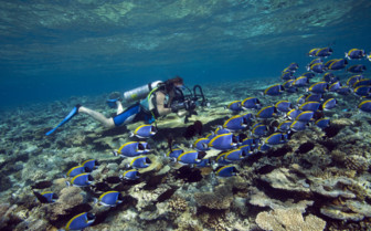 Picture of a coral reef in the Central Atolls