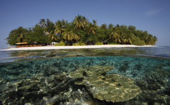 Picture of Angsana Ihuru Atoll