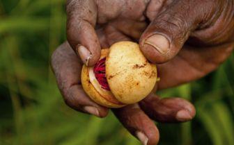 Nutmeg, Grenada
