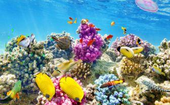 Diving underwater world