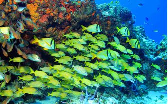 Coral reef in Mexico