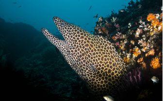 Moray Eel Underwater