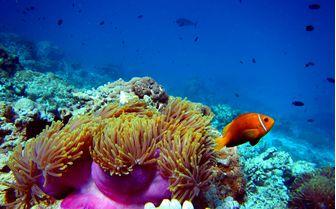 Diving in North Madagascar