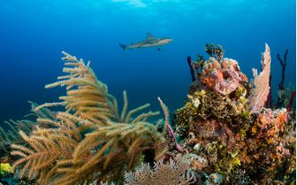 Coral reef Bahamas
