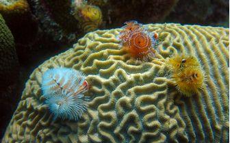 Diving, ABC Islands