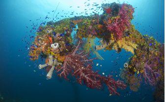 Coral Micronesia