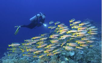 Coral Fishes Underwater, Micronesia