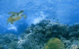 Underwater Turtle, Philippines