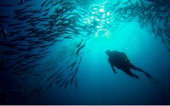 Diving in Borneo, Malaysia