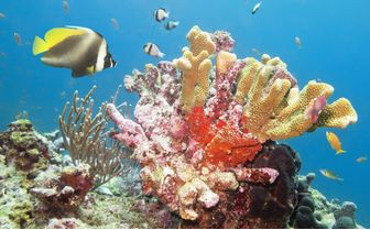 Coral and Fish, Similian Islands, Thailand