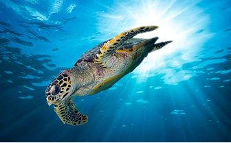 Diving with Turtles in the Seychelles