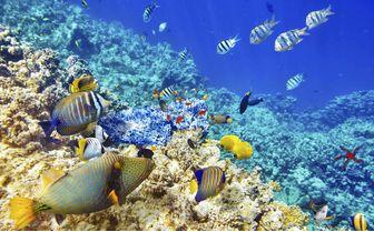 Fish Swimming around Coral, Maldives