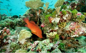 Fish amongst coral, Seychelles
