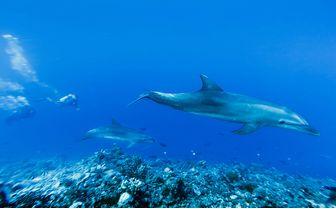 Dolphins, Tiputa Pass, French Polynesia