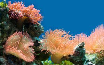 Colourful Coral, Papua New Guinea