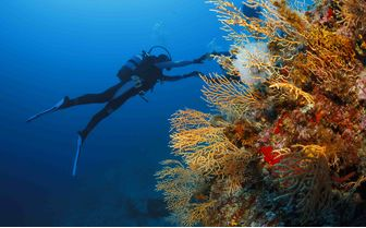 Diving with coral in the Adriatic sea