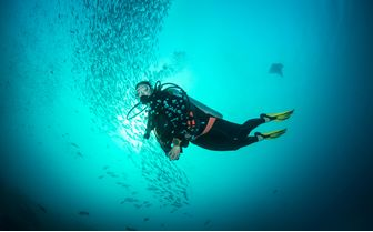 Diver with fish Micronesia