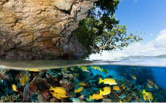 Fish at the water surface