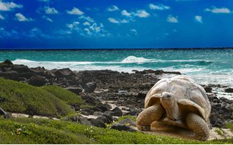 Tortoise on Beach