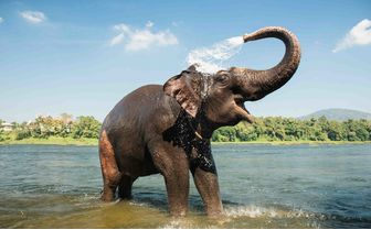 Elephant in water, India
