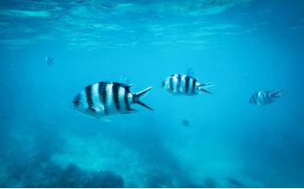 Tropical fish swimming in Zanzibar