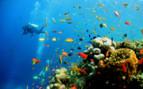 Picture of Sipadan diving