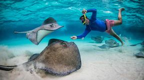 Snorkelling with stingrays, Cayman Islands