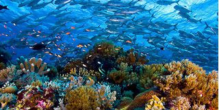 Busy reef of bright coral with a school of fish
