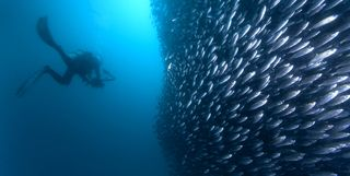 School of fish in the Galapagos