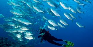 Diving with fish, Palau