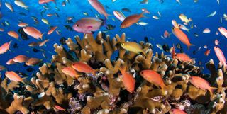 Colourful Reef Fish
