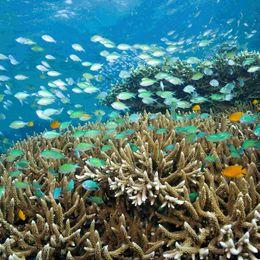Coral Pemuteran, Bali, Indonesia